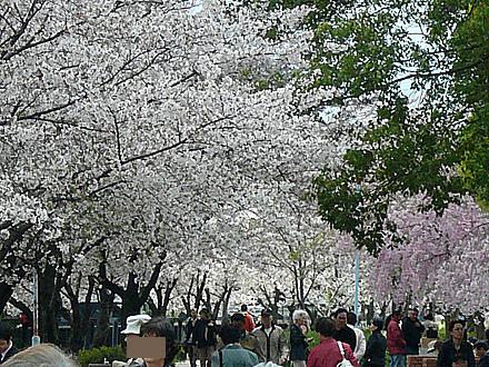 himawari-009.jpg