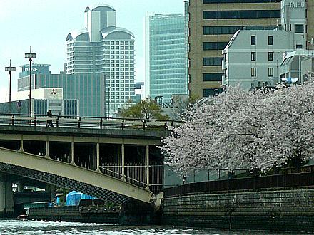 himawari-069.jpg