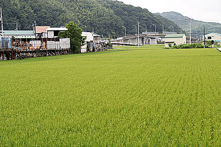 kouchi_2010-088.jpg